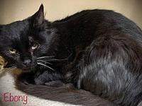 My story Ebony and her siblings were found abandoned in