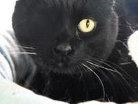 My story Hi, my name is Ebony. I was brought in the Cat