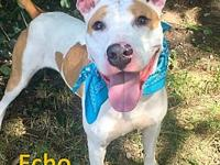 Echo's story Echo aka Mave is new to the Flint City