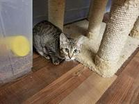 Echo's story Echo is a lovely tabby girl who would love