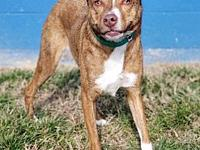 Echo's story Echo #2268 is a 1.5-year-old female,