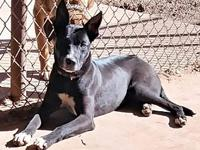 My story Echo is a 9 month old lab mix who was dumped