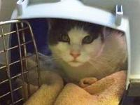Ecko is a 3 year old spayed female found as a stay so