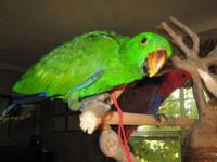 I have a male Eclectus parrot chick 10 weeks aged