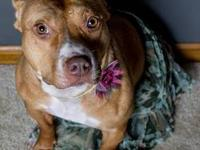 Eclipse is a 4 year old American Pitbull Terrier. He is
