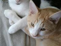 Eclipse and Solar are eight months old bonded brothers