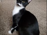 Eclipse is a gorgeous 1 year old female short-haired