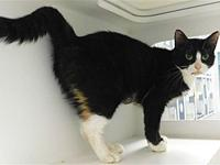 Eclipse's story Meow! My name is Eclipse. I am a