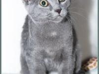 EDAM's story $97.50 FEE INCLUDES: neutering/spaying,