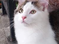 Eddie's story A gorgeous boy whos great with kids cats
