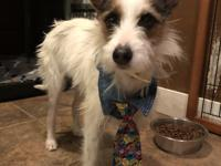 Eddie is a 3 year old terrier about 26 lbs. He came to