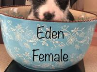 Eden was born 2/8/18. His mom is a pug/ beagle mix. The