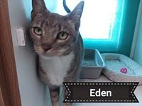 Eden's story Friendly and social Eden is anxious to