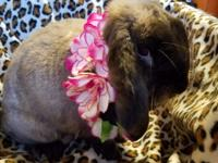 Meet Eeyore!  This lovely young lady bun was found