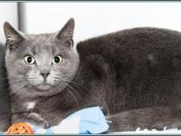 EFFIE's story $97.50 FEE INCLUDES: neutering/spaying,