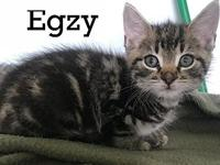Egzy's story About Egzy: My name is Egzy, and I was