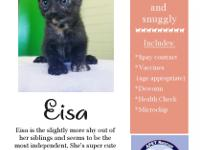 My name is Eisa. I am so very sweet and very very cute.