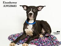 Eisenhower's story All dogs in the adoption program are