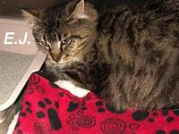 EJ's story Our pets are spayed/neutered and current on