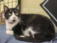 El Gato's story El Gato is *the cat* but he'd really