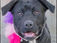 Elaine is a wonderful Black Lab mix who was recently