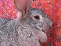 A serene beauty with an amazing coat and dewlap! Every