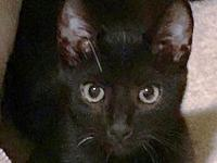 Eleanor's story Eleanor is a gorgeous black kitty with