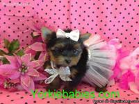 ELEGANT Teacup Puppies.  We specialize in Teacup