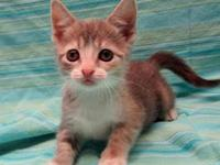 Elena's story 18-C09-003 Elena Breed: DSH Mix Size: