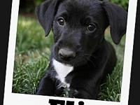 ELI's story My name is Eli but my foster parents have