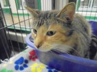 Elisha is a gorgeous little torbie girl. She loves to