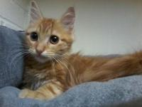 Eliska's story This adorable and gorgeous kitten is one