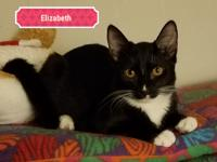 Elizabeth, Female, approx DOB August 2017, DSH Tuxedo