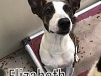 My story Elizabeth is a 1-2 yr old Pittie mix. Oh my!