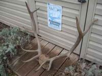 Elk antlers. 5 X 5. Call  Location: York