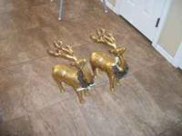 ELK FOR SALE REALLY NICE NEW CALL TO SEE  Location:
