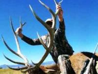 If you are hunting in Colorado, the state with more elk