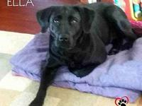 Ella-Adoption Pending's story Ella is a 2 year old lab!