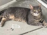 Ella's story Ella (f) - and her sister Moon werre