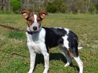 Ella is a pretty 4 month old Mixed Breed puppy,