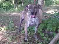 We believe that Ella is a Mountain Cur mix, but cannot