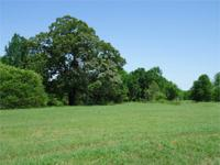 Absolutely gorgeous farm tract in west central Georgia!