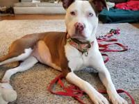 Elle is a 1 year old Pittbull who can be shy at first