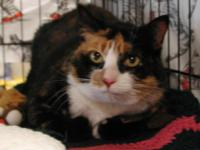 Elle is a 10 year old Calico female. Elle is a sweet