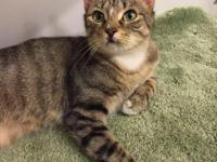Elle is a social cat! She loves to talk to you and meow