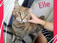 Elle's story My name is Elle! I'm a very vocal kitty