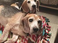 Ellie's story Meet Buster and Ellie! They are a bonded