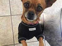 Ellie's story Ellie is a 1 1/2 year old, spayed,