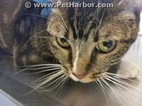 ELLIE's story Clay County Animal Control Hours of