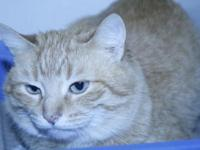 I am available for adoption at our off site location,